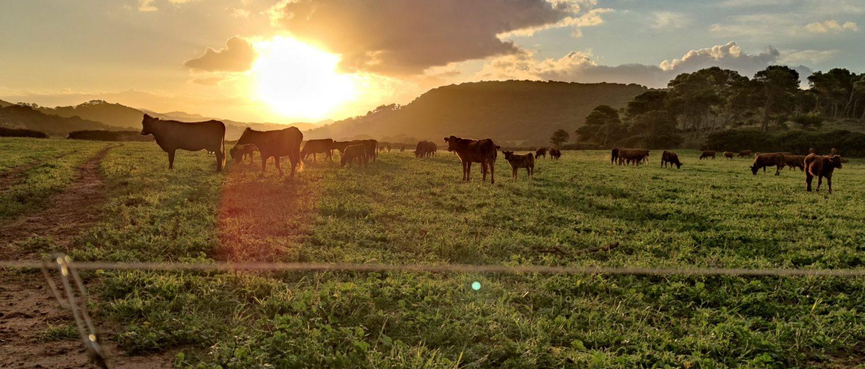 gestió de cultius i pastures